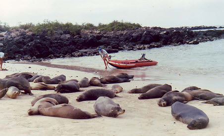 anchoring-with-sealions-1